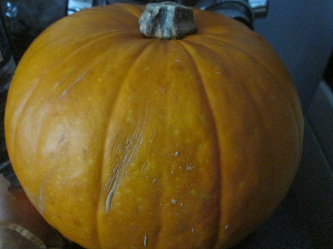 Gorgeous Pumpkin!!