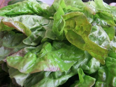 Lettuce For Chicken Salads